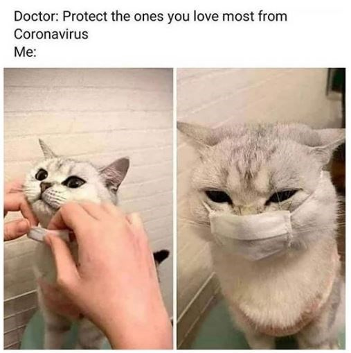 Cat - Doctor: Protect the ones you love most from Coronavirus Me: