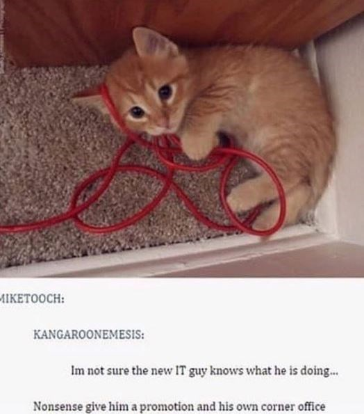 Cat - ИIКЕТООСH: KANGAROONEMESIS: Im not sure the new IT guy knows what he is doing... Nonsense give him a promotion and his own corner office