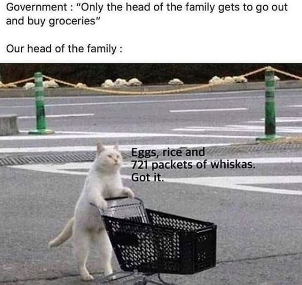 """Cat - Government : """"Only the head of the family gets to go out and buy groceries"""" Our head of the family : Eggs, rice and 721 packets of whiskas. Got it."""