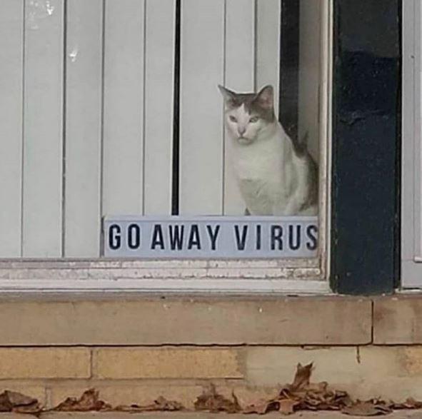Cat - GO AWAY VIRUS
