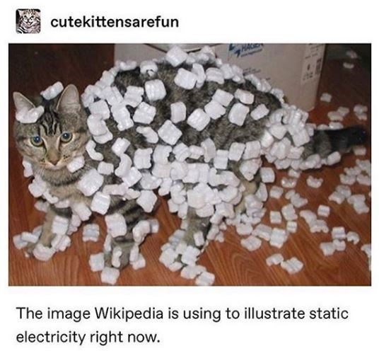 Cat - cutekittensarefun The image Wikipedia is using to illustrate static electricity right now.