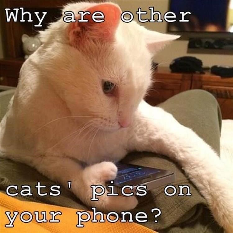 Cat - Why are other cats' piCs on your phone?