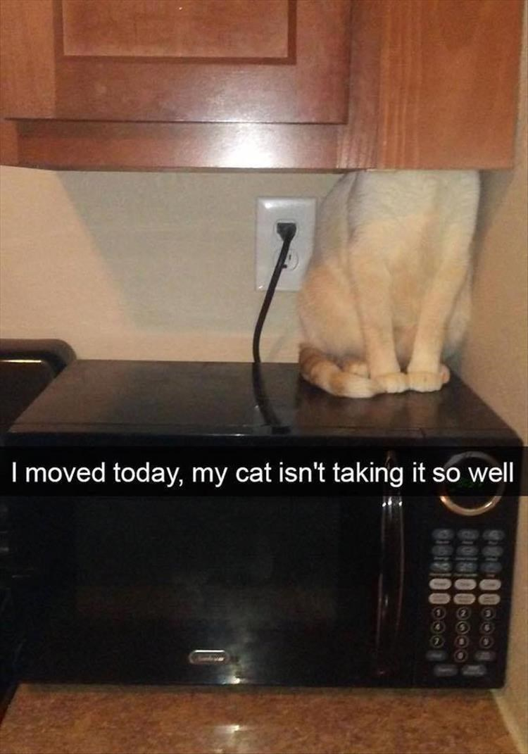 Property - I moved today, my cat isn't taking it so well