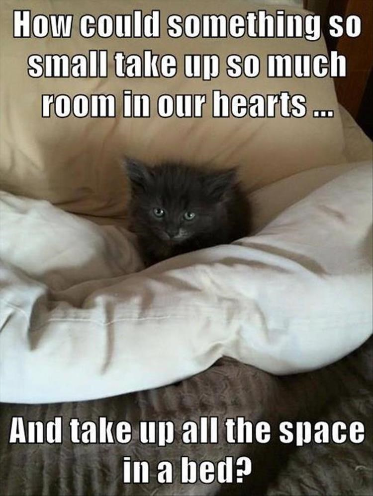Cat - How could something so small take up so much room in our hearts . And take up all the space in a bed?