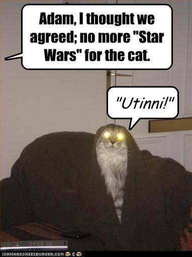 """Photo caption - Adam, I thought we agreed; no more """"Star Wars"""" for the cat. """"Utinni!"""" ICANHASCHEEZBURGER.COM E"""