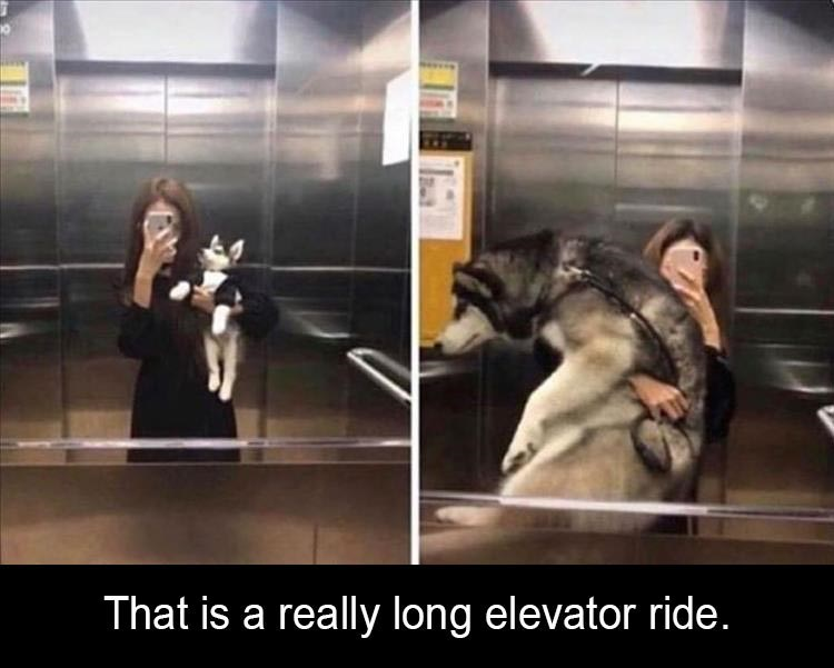 dog meme that is a really long elevator ride before and after pics of a woman taking a mirror selfie in an elevator while holding a dog as a puppy and as a large adult