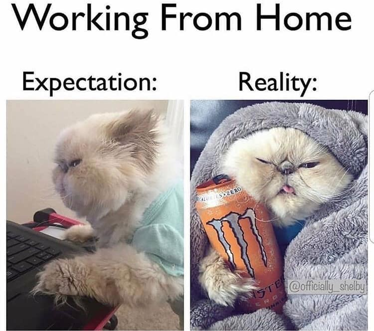 Cat - Working From Home Expectation: Reality: söZERO STE @officially shelby SRO