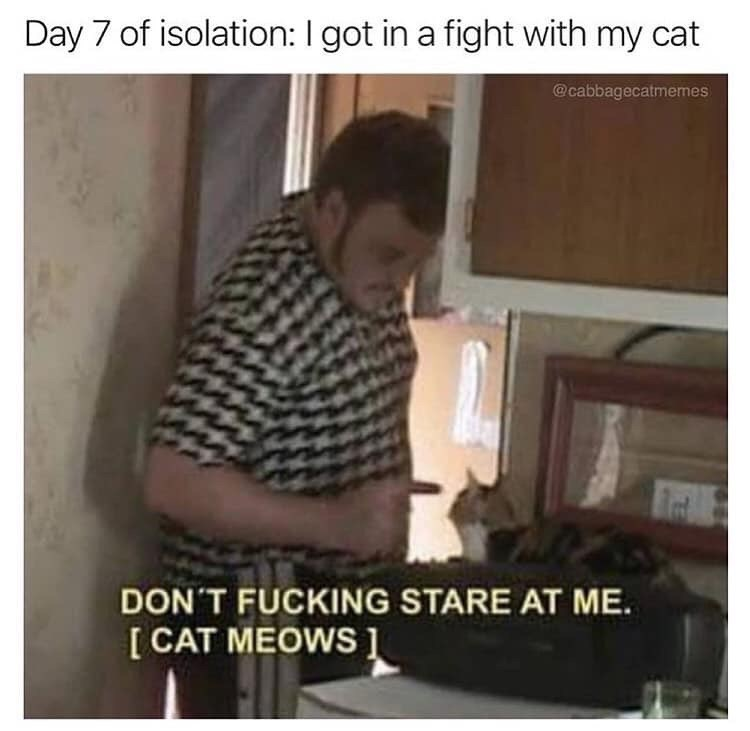 Text - Day 7 of isolation: I got in a fight with my cat @cabbagecatmemes DON'T FUCKING STARE AT ME. [ CAT MEOWS 1