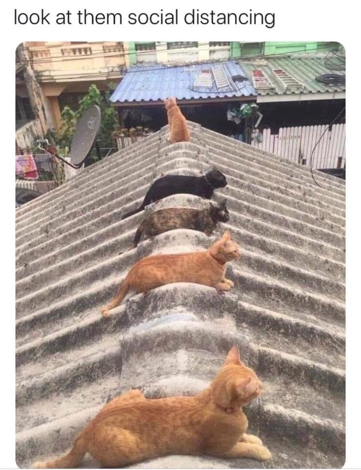 Street dog - look at them social distancing