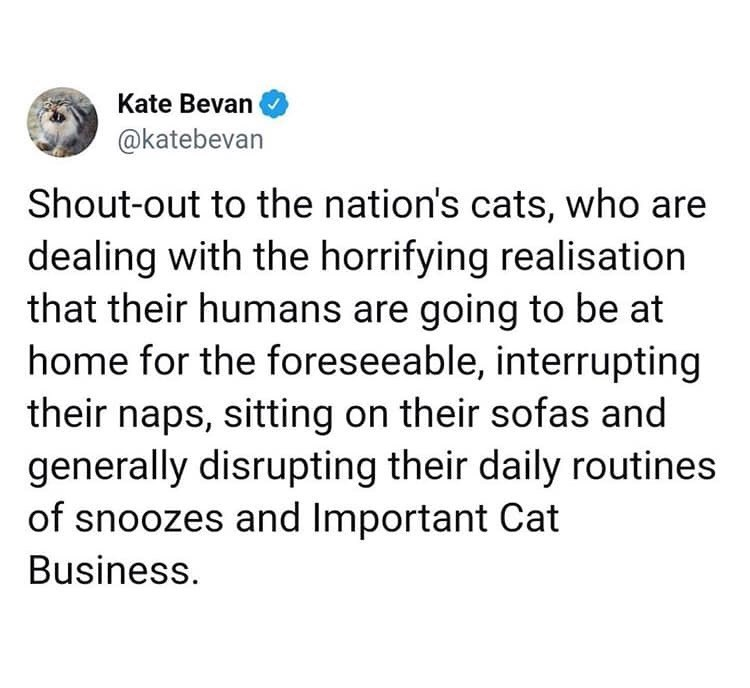 Text - Kate Bevan @katebevan Shout-out to the nation's cats, who are dealing with the horrifying realisation that their humans are going to be at home for the foreseeable, interrupting their naps, sitting on their sofas and generally disrupting their daily routines of snoozes and Important Cat Business.
