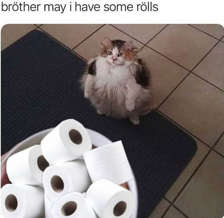 Cat - bröther may i have some rölls