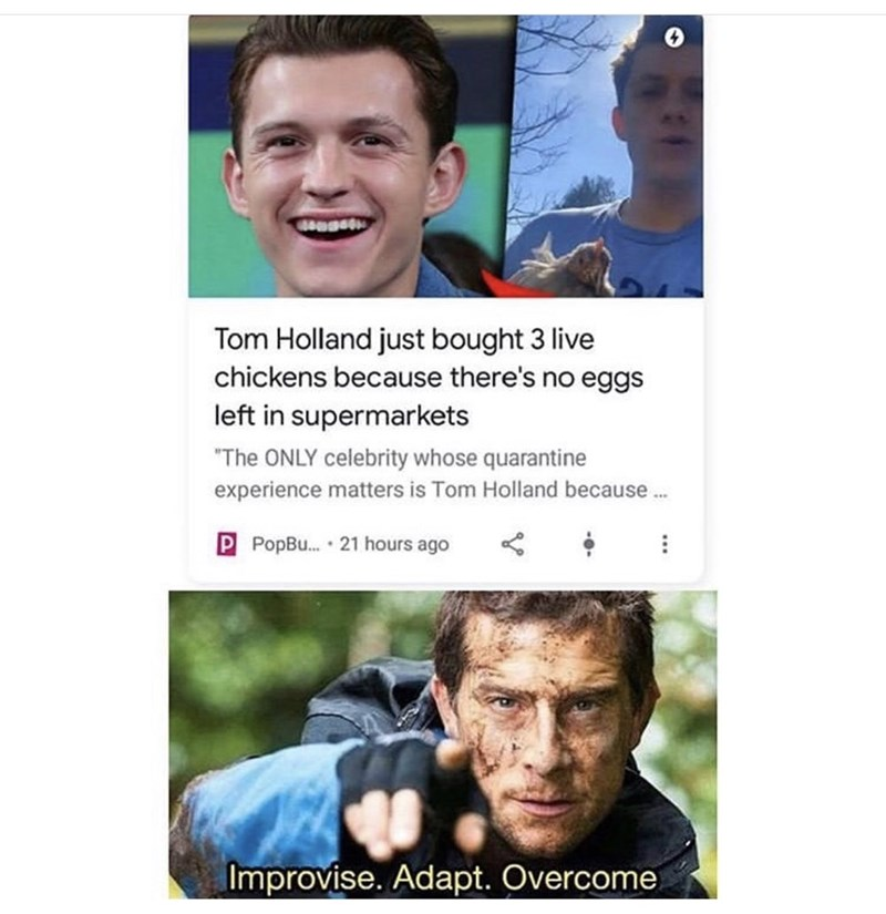 "Funny news headline that reads, ""Tom Holland just bought 3 live chickens because there's no eggs left in supermarkets"" 