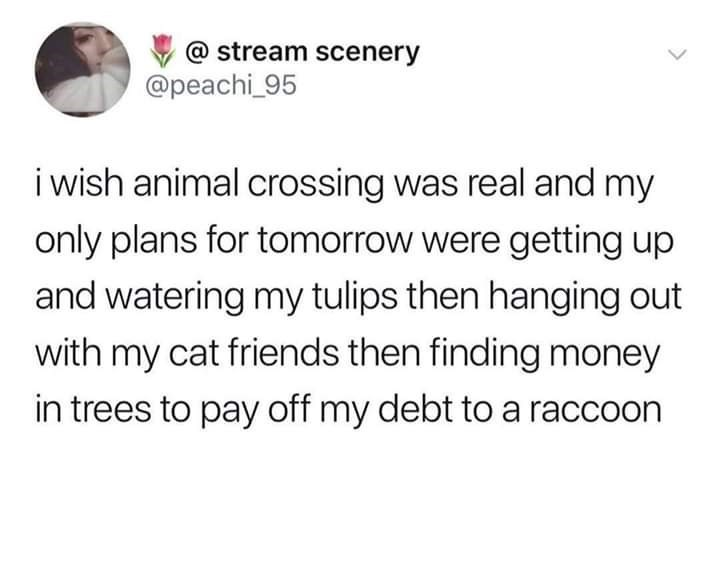Text - @ stream scenery @peachi_95 i wish animal crossing was real and my only plans for tomorrow were getting up and watering my tulips then hanging out with my cat friends then finding money in trees to pay off my debt to a raccoon