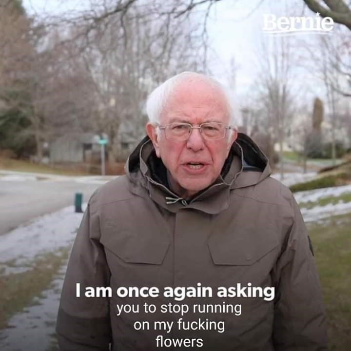 Photo caption - Bernie Iam once again asking you to stop running on my fucking flowers
