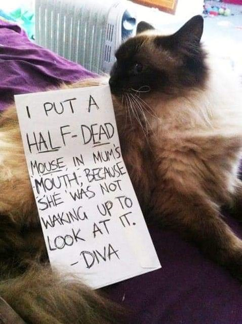Cat - I PUT A HAL F-DEAD MOUSE IN MUMS MOUTH, BECAUSE SHE 'WÁS NOT WAKING UP TO Look AT IT. -DIVA