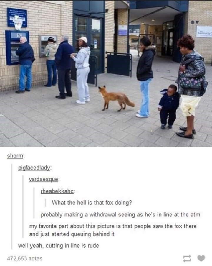 tumblr thread what the hell is that fox doing probably making a withdrawal seeing as he's in line at the atm my favorite part about this picture is that people saw the fox there and just started queuing behind it