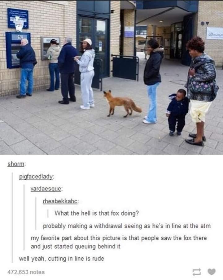 animal memes - 9463212800