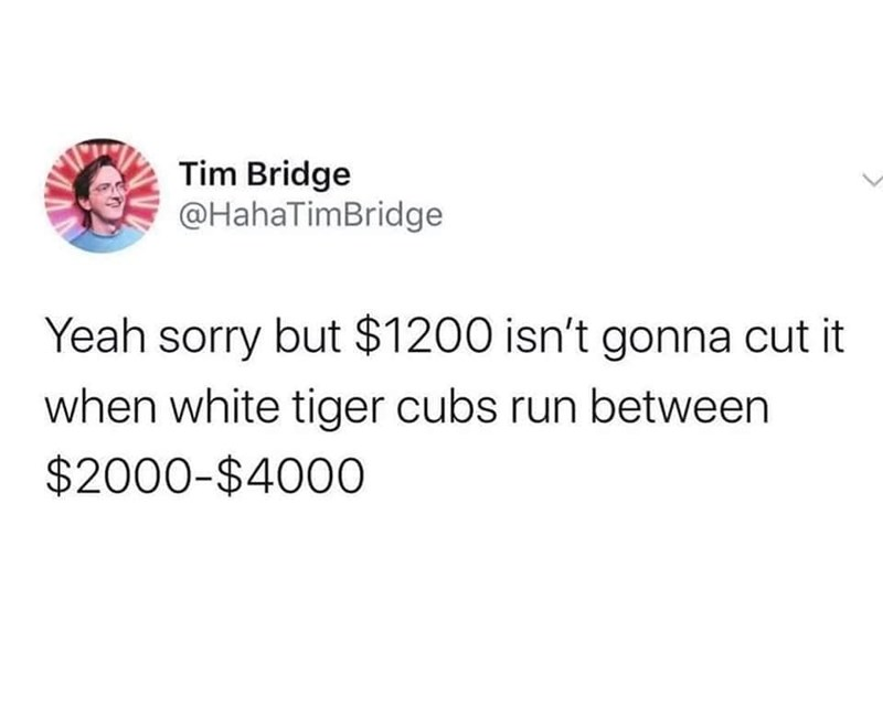 Text - Tim Bridge @HahaTimBridge Yeah sorry but $1200 isn't gonna cut it when white tiger cubs run between $2000-$400O
