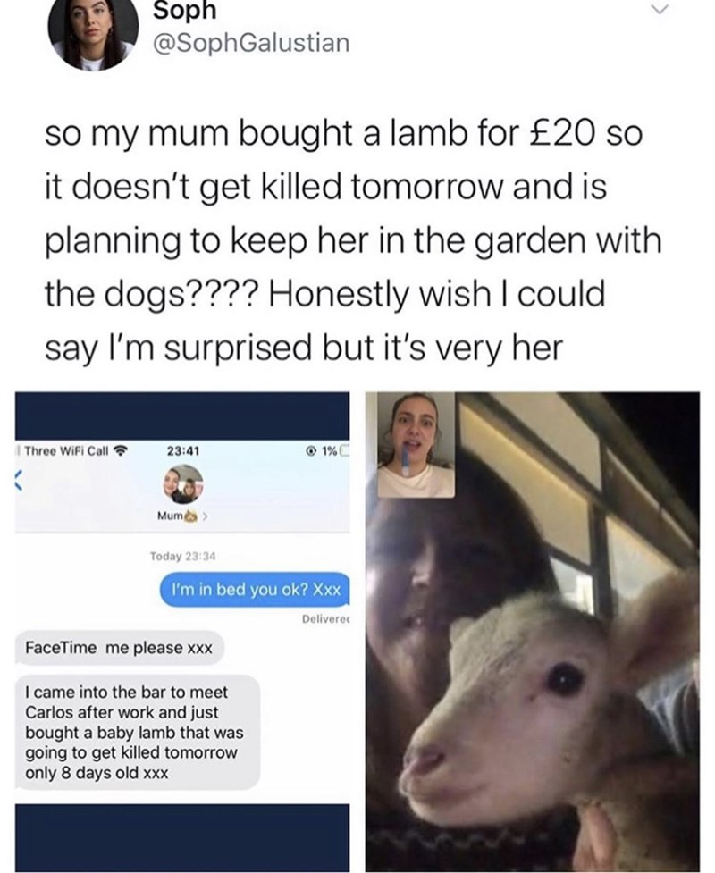 Nose - Soph @SophGalustian so my mum bought a lamb for £20 so it doesn't get killed tomorrow and is planning to keep her in the garden with the dogs???? Honestly wish I could say I'm surprised but it's very her Three WiFi Call ? 23:41 O 1%C Mumes> Today 23:34 I'm in bed you ok? Xxx Deliverec FaceTime me please xxx I came into the bar to meet Carlos after work and just bought a baby lamb that was going to get killed tomorrow only 8 days old xx