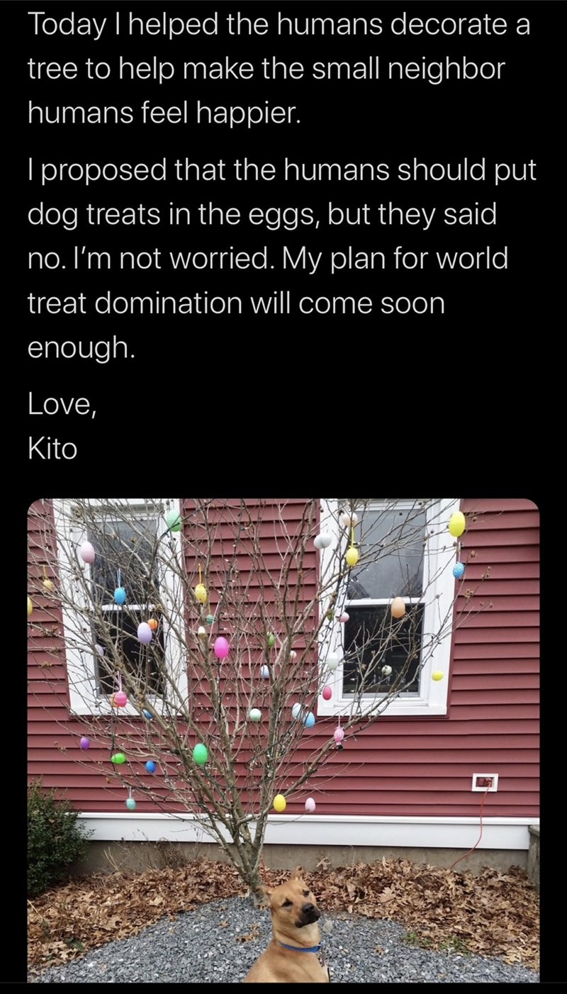 Text - Today I helped the humans decorate a tree to help make the small neighbor humans feel happier. I proposed that the humans should put dog treats in the eggs, but they said no. I'm not worried. My plan for world treat domination will come soon enough. Love, Kito