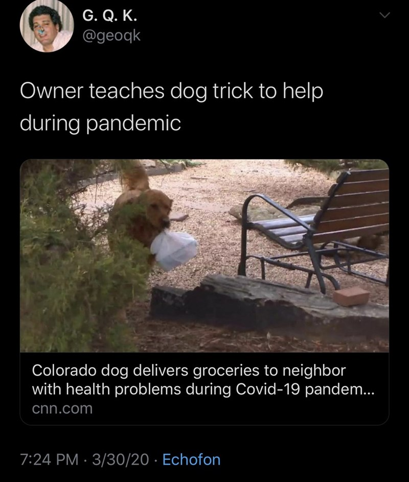 Adaptation - G. Q. K. @geoqk Owner teaches dog trick to help during pandemic Colorado dog delivers groceries to neighbor with health problems during Covid-19 pandem... cnn.com 7:24 PM · 3/30/20 · Echofon