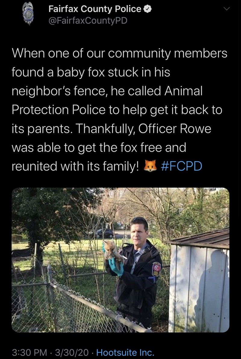 Text - Fairfax County Police O @FairfaxCountyPD When one of our community members found a baby fox stuck in his neighbor's fence, he called Animal Protection Police to help get it back to its parents. Thankfully, Officer Rowe was able to get the fox free and reunited with its family! #FCPD 3:30 PM · 3/30/20 · Hootsuite Inc.
