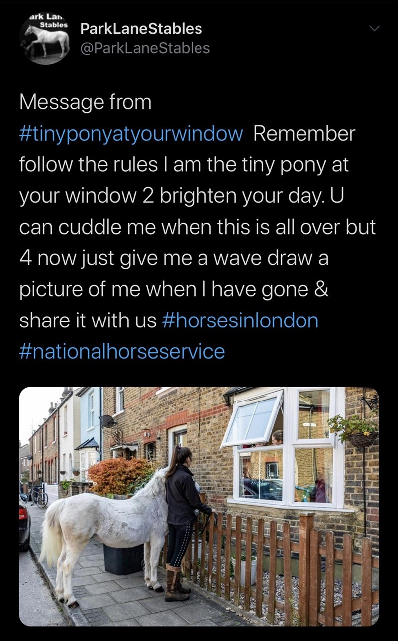 Canidae - ark Lan Stables ParkLaneStables @ParkLaneStables Message from #tinyponyatyourwindow Remember follow the rules I am the tiny pony at your window 2 brighten your day. U can cuddle me when this is all over but 4 now just give me a wave draw a picture of me when I have gone & share it with us #horsesinlondon #nationalhorseservice