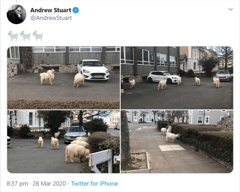 White - Andrew Stuart @AndrewStuart AYG9 XYV 8:37 pm · 28 Mar 2020 · Twitter for iPhone