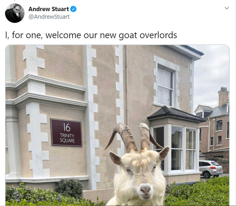 Property - Andrew Stuart @AndrewStuart I, for one, welcome our new goat overlords 16 TRINITY SQUARE
