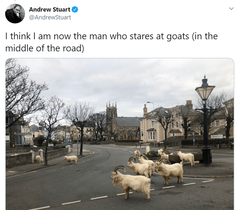 Transport - Andrew Stuart @AndrewStuart I think I am now the man who stares at goats (in the middle of the road)