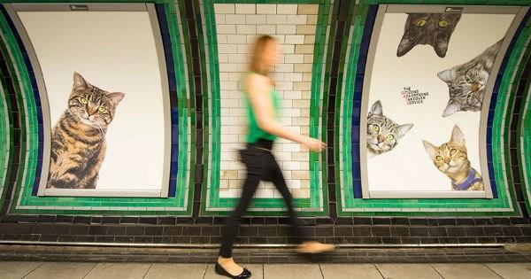 commute advertisement London creative ads Cats - 946437