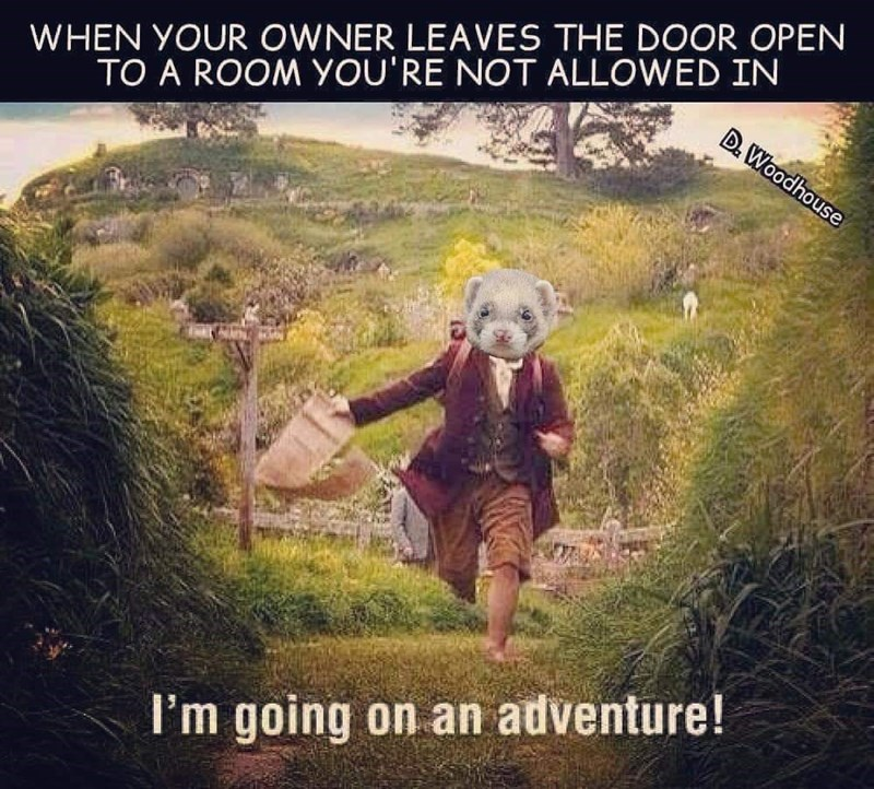 Text - WHEN YOUR OWNER LEAVES THE DOOR OPEN D. Woodhouse TO A ROOM YOU'RE NOT ALLOWED IN I'm going on an adventure!