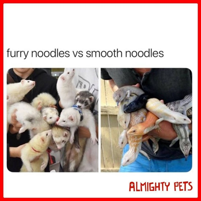 Human - furry noodles vs smooth noodles ALMIGHTY PETS