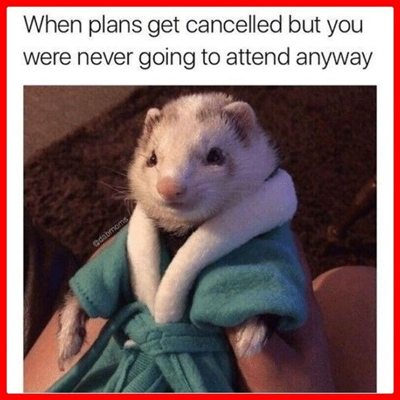 Mammal - When plans get cancelled but you were never going to attend anyway edabmoms