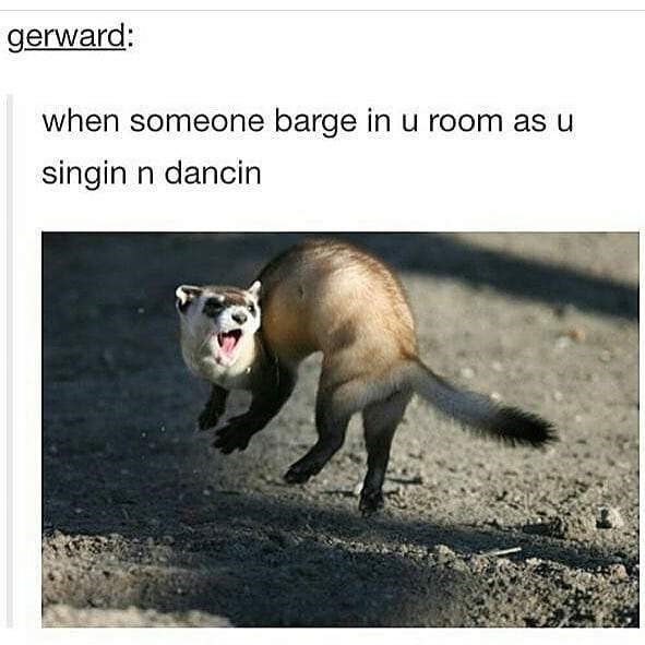 Ferret - gerward: when someone barge in u room as u singin n dancin