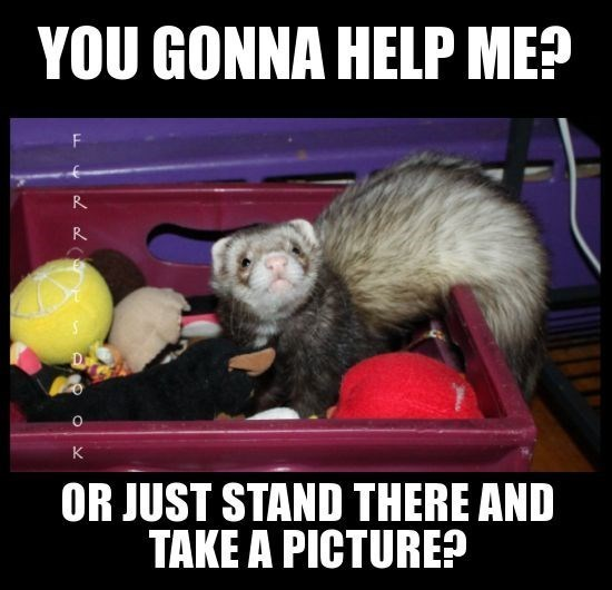 Ferret - YOU GONNA HELP ME? R R OR JUST STAND THERE AND TAKE A PICTURE?