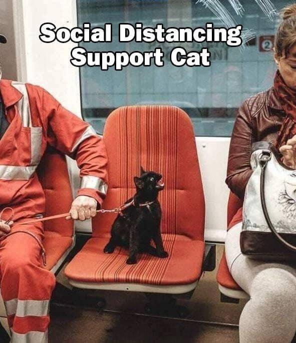 cat memes - 9464805376