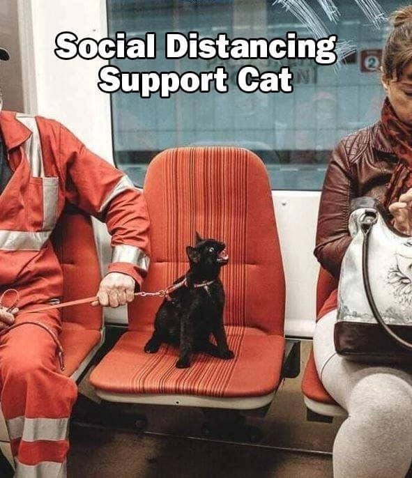 social distancing support cat black cat on a leash taking up a seat on a bus and hissing at a person