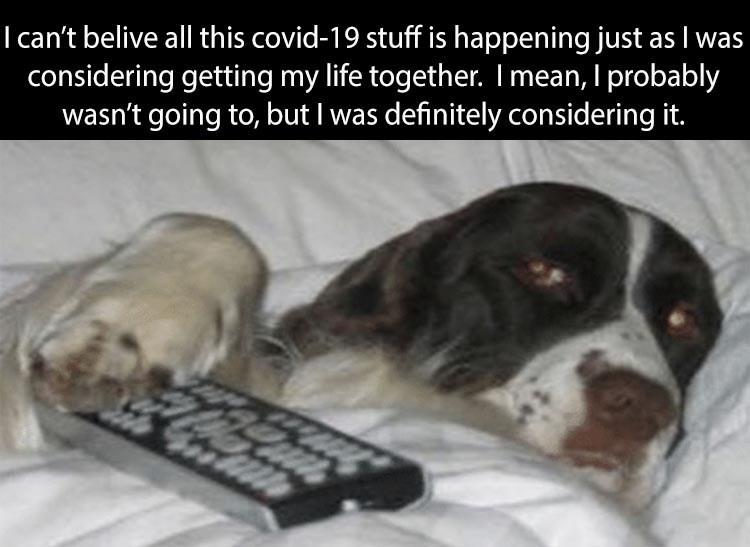 dog memes - 9464825344