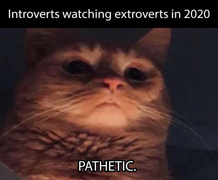 introverts watching extroverts in 2020 pathetic cat cast in shadows looking down ominously