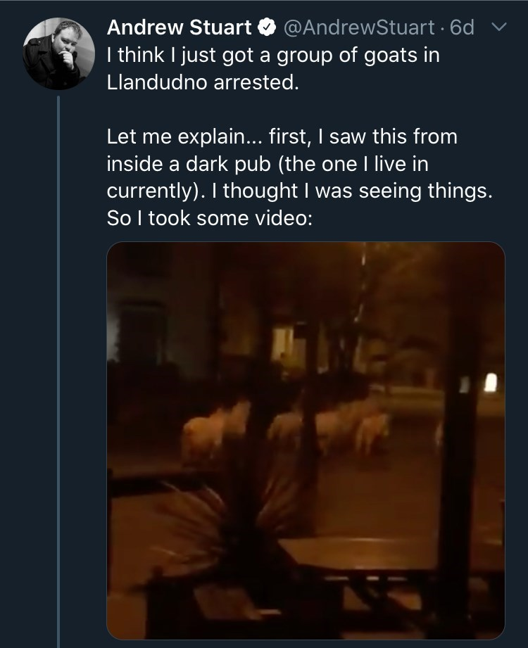Text - Andrew Stuart O @AndrewStuart · 6d v I think I just got a group of goats in Llandudno arrested. Let me explain... first, I saw this from inside a dark pub (the one I live in currently). I thought I was seeing things. So I took some video: