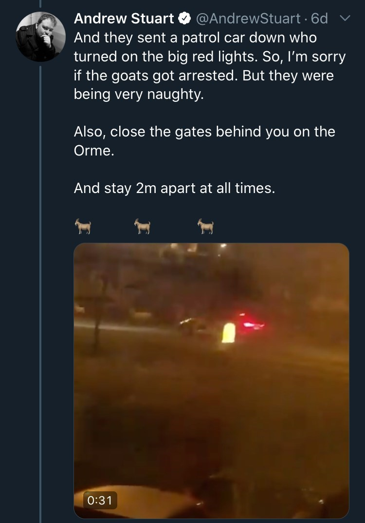 Text - Andrew Stuart @AndrewStuart · 6d v And they sent a patrol car down who turned on the big red lights. So, I'm sorry if the goats got arrested. But they were being very naughty. Also, close the gates behind you on the Orme. And stay 2m apart at all times. 0:31