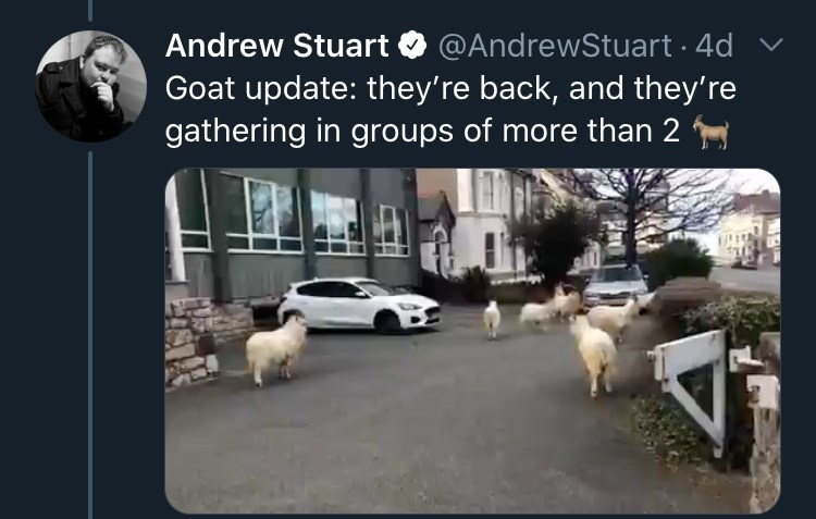 Transport - Andrew Stuart O @AndrewStuart · 4d Goat update: they're back, and they're gathering in groups of more than 2
