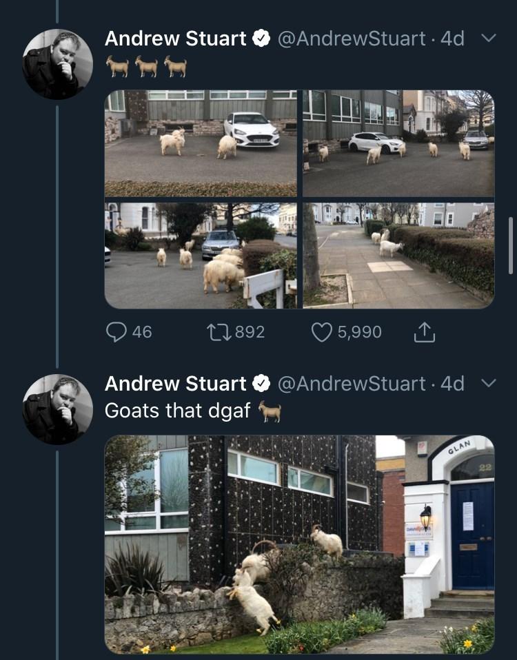Text - Property - Andrew Stuart O @AndrewStuart · 4d v O 46 27892 O 5,990 Andrew Stuart @AndrewStuart · 4d Goats that dgaf GLAN DAnd