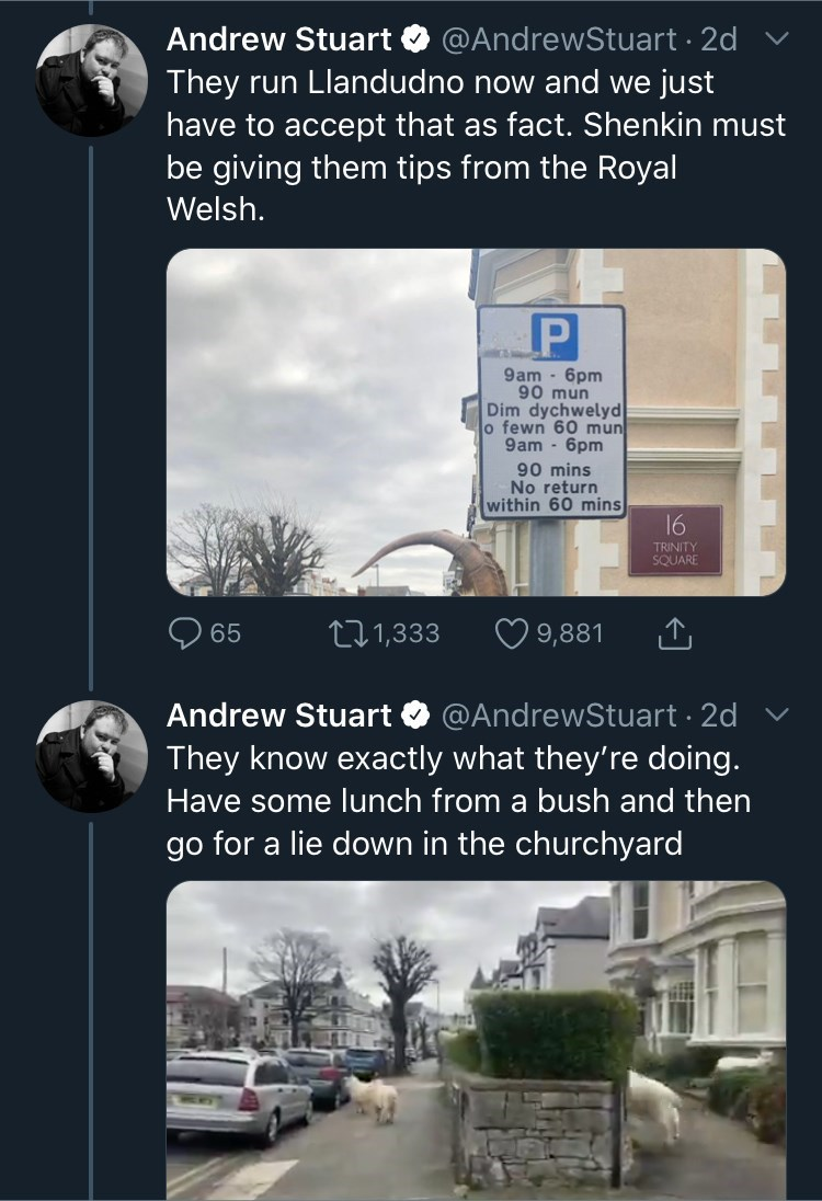 Font - Andrew Stuart O @AndrewStuart · 2d They run Llandudno now and we just have to accept that as fact. Shenkin must be giving them tips from the Royal Welsh. 9am - 6pm 90 mun Dim dychwelyd o fewn 60 mun 9am - 6pm 90 mins No return within 60 mins 16 TRINITY SQUARE 65 271,333 O 9,881 Andrew Stuart O @AndrewStuart · 2d They know exactly what they're doing. Have some lunch from a bush and then go for a lie down in the churchyard