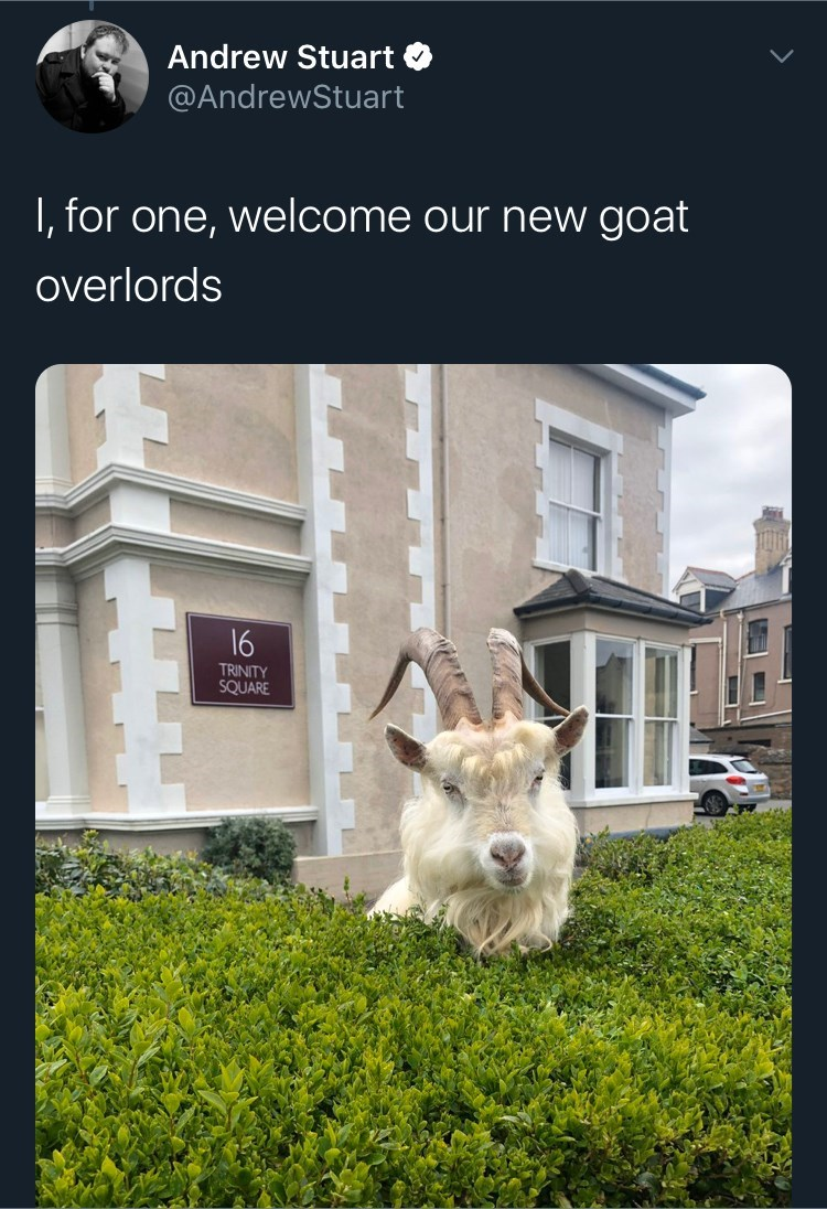 Property - Andrew Stuart O @AndrewStuart I, for one, welcome our new goat overlords 16 TRINITY SQUARE