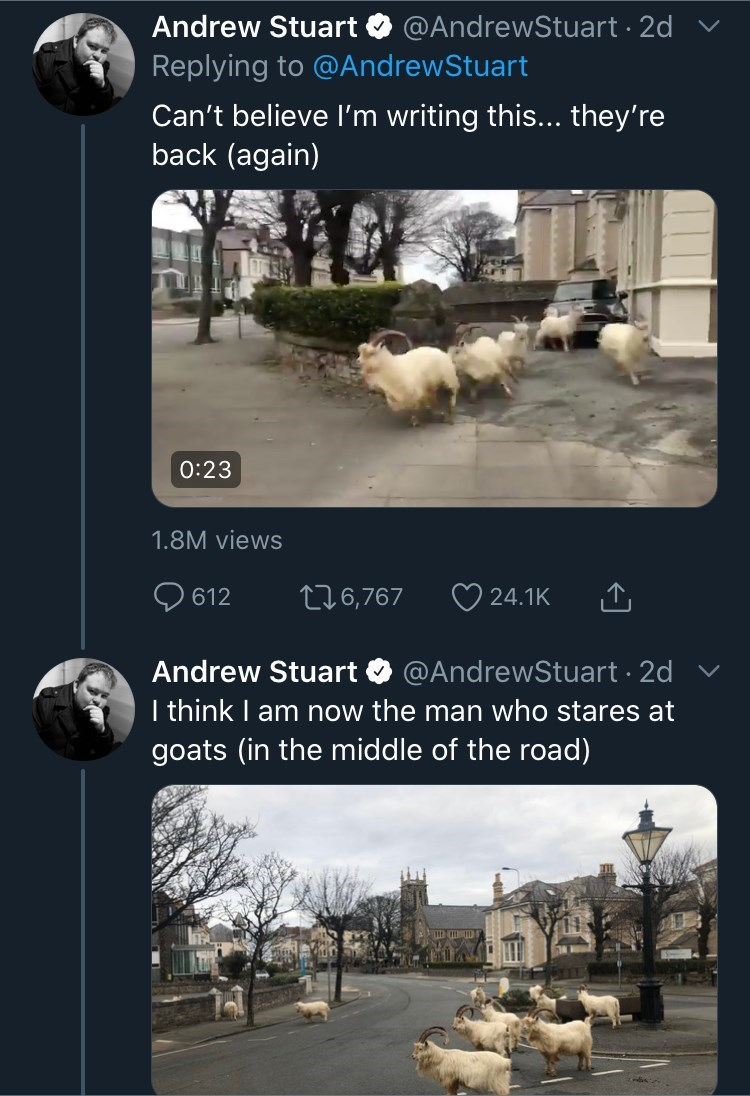 Sheep - Andrew Stuart @AndrewStuart · 2d Replying to @AndrewStuart Can't believe l'm writing this... they're back (again) 0:23 1.8M views 9 612 276,767 O 24.1K Andrew Stuart O @AndrewStuart · 2d I think I am now the man who stares at goats (in the middle of the road)