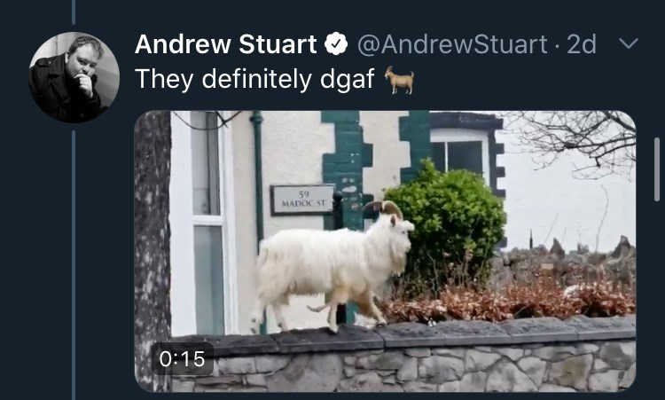 Adaptation - Andrew Stuart O @AndrewStuart · 2d They definitely dgaf 59 MADOC ST 0:15
