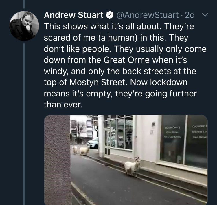 Text - Andrew Stuart O @AndrewStuart · 2d This shows what it's all about. They're scared of me (a human) in this. They don't like people. They usually only come down from the Great Orme when it's windy, and only the back streets at the top of Mostyn Street. Now lockdown means it's empty, they're going further than ever. ane Camng Corporate E Ofe aes Business Lur MICOM huieg Free Deliver
