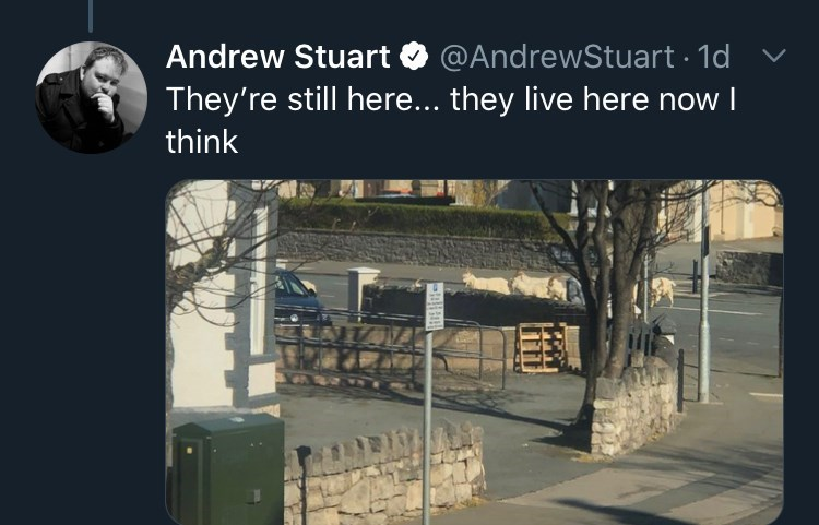 Architecture - Andrew Stuart O @AndrewStuart · 1d They're still here... they live here now I think